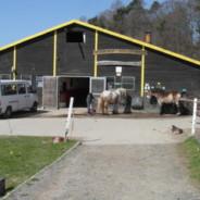 Paard Kellerwald