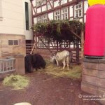 2013-1215 Bad Wildungen - Vakantiehuis Frankenau-10