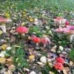 2014-0922 1397 - Vakantiehuis Frankenau - Foto's van Gasten