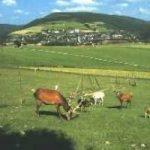 Ettelsberg - Willingen